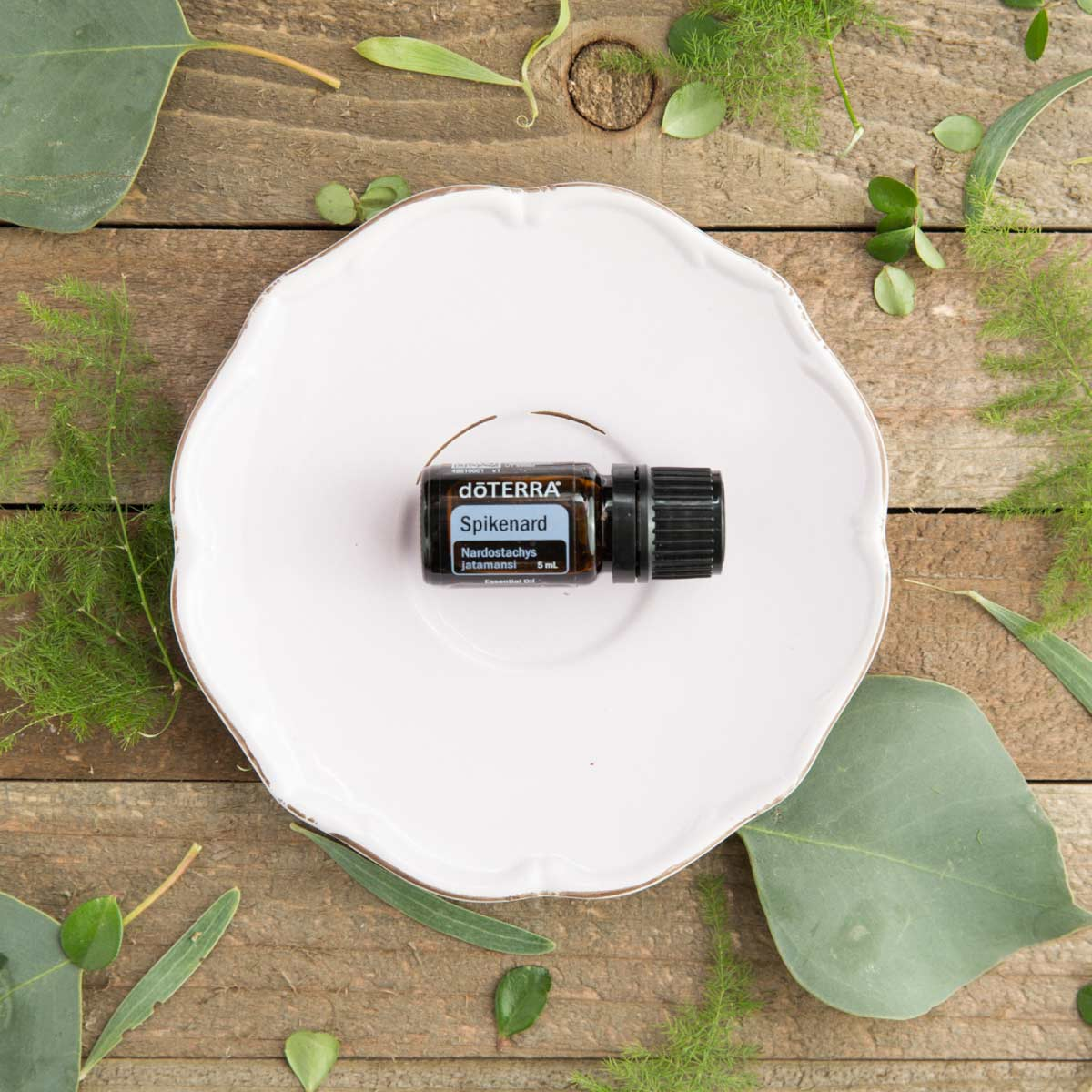 Spikenard essential oil bottle on a white plate surrounded by green leaves. How do you use Spikenard essential oil? Spikenard essential oil can be used to create a relaxing atmosphere or to soothe the skin.