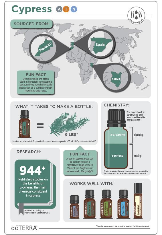 2x3-566x819-cypress-infographic-4.jpg