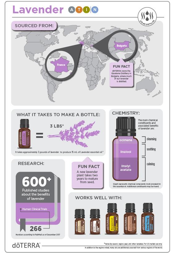 2x3-566x819-lavender-infographic-3.jpg