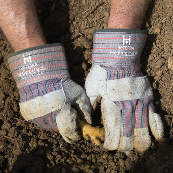 1x1_600x600_hands_in_dirt_ginger_healing_hands_ginger_us_english_web.jpg