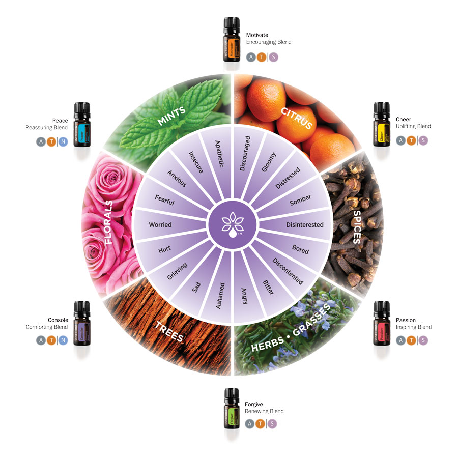 1x1_900x900_emotional_aromatherapy_wheel_us_english_web.jpg